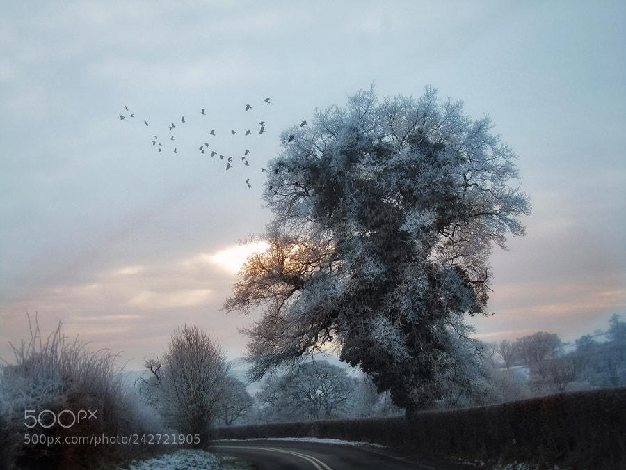 Spirit of the Frozen Meadows