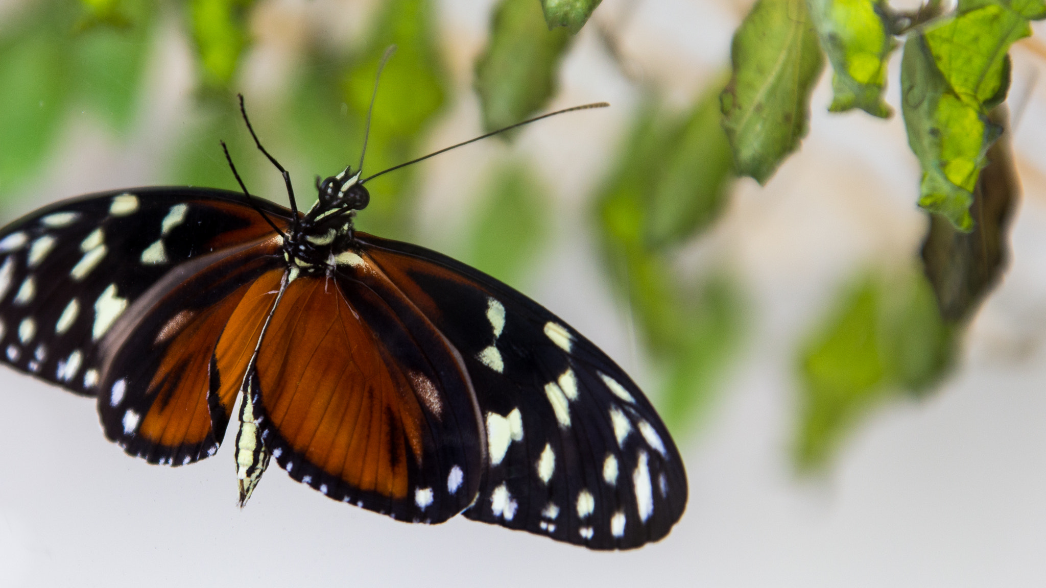 Photograph A Butterfly Born by Anjan Upadhya on 500px
