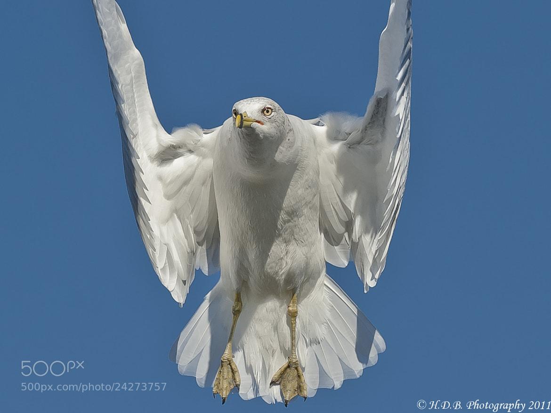 Photograph Air Dancer by Harold Begun on 500px