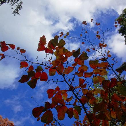 Autumn beauty, Sony DSC-TX30