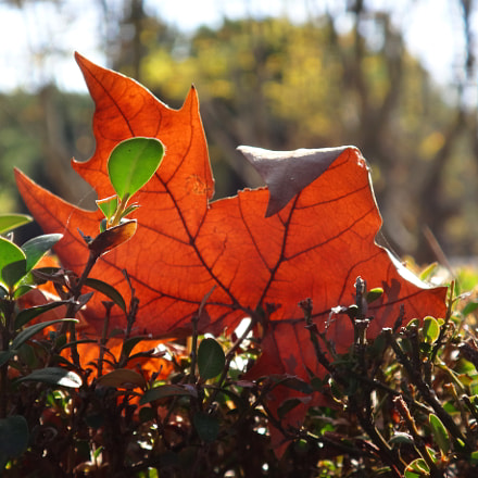 Autumn fire, Sony DSC-TX30