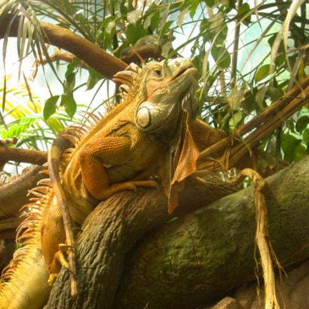 reptile, Nikon E995
