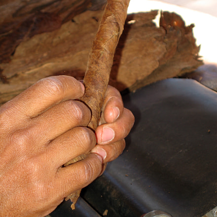Preparing cigar, Canon POWERSHOT SD500