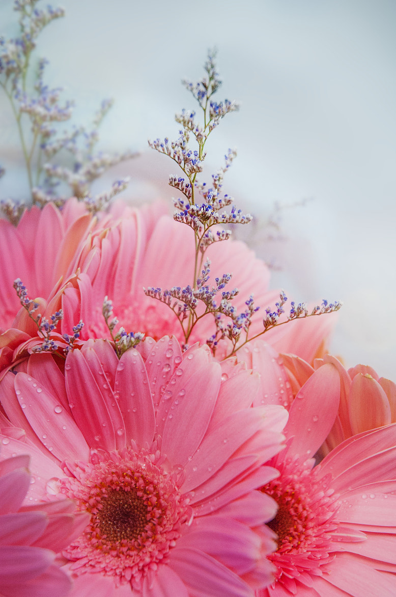 Photograph Pink by Tim Norton on 500px