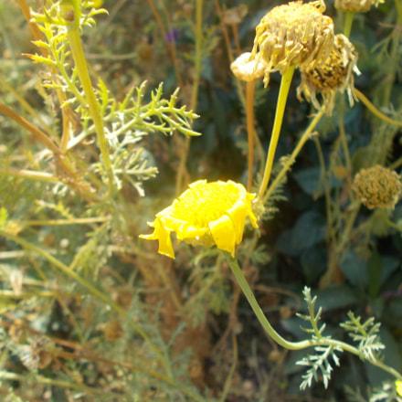 Yellow Flower Got Hit, Nikon COOLPIX L26