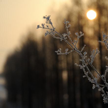 frosty, Nikon D700, AF-S VR Zoom-Nikkor 24-120mm f/3.5-5.6G IF-ED