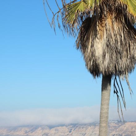 La Jolla Shores' Palm, Canon EOS REBEL T3I, Canon EF 50mm f/1.8 STM