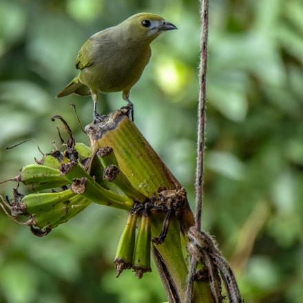 Find the Green Bird!, Panasonic DMC-TZ60