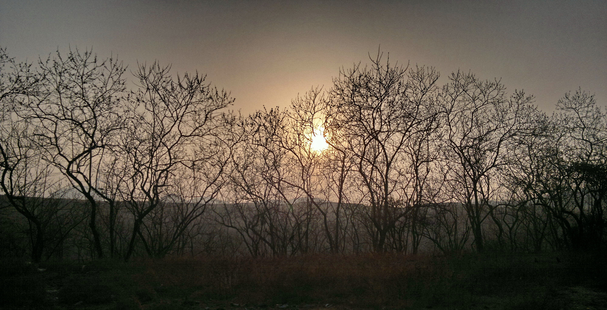 Photograph Like Fire in the Bushes by Rakesh  Hegde on 500px