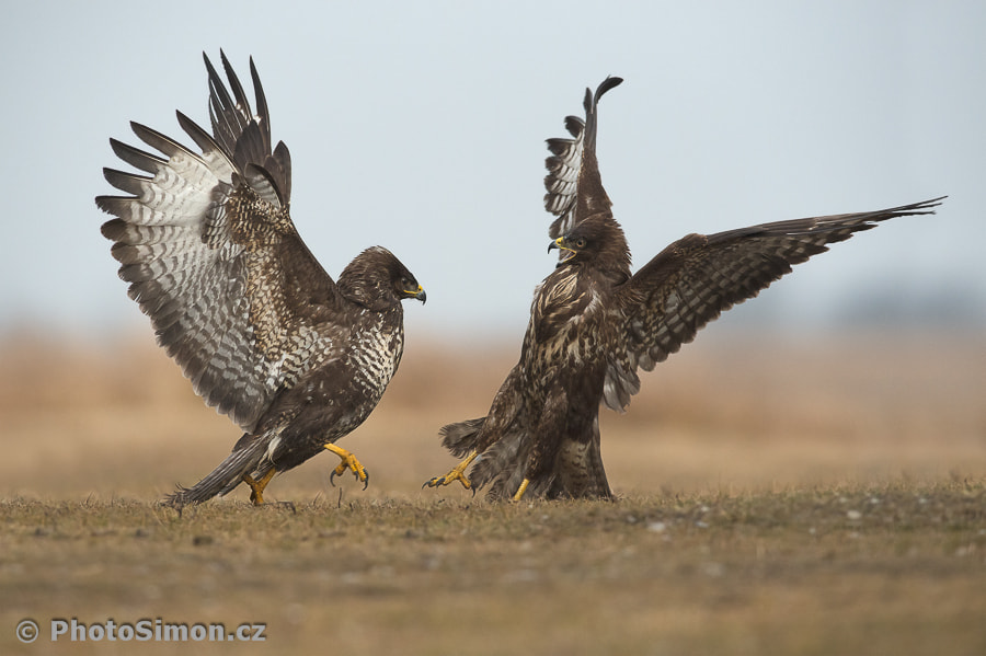 Photograph fight by Petr Šimon on 500px