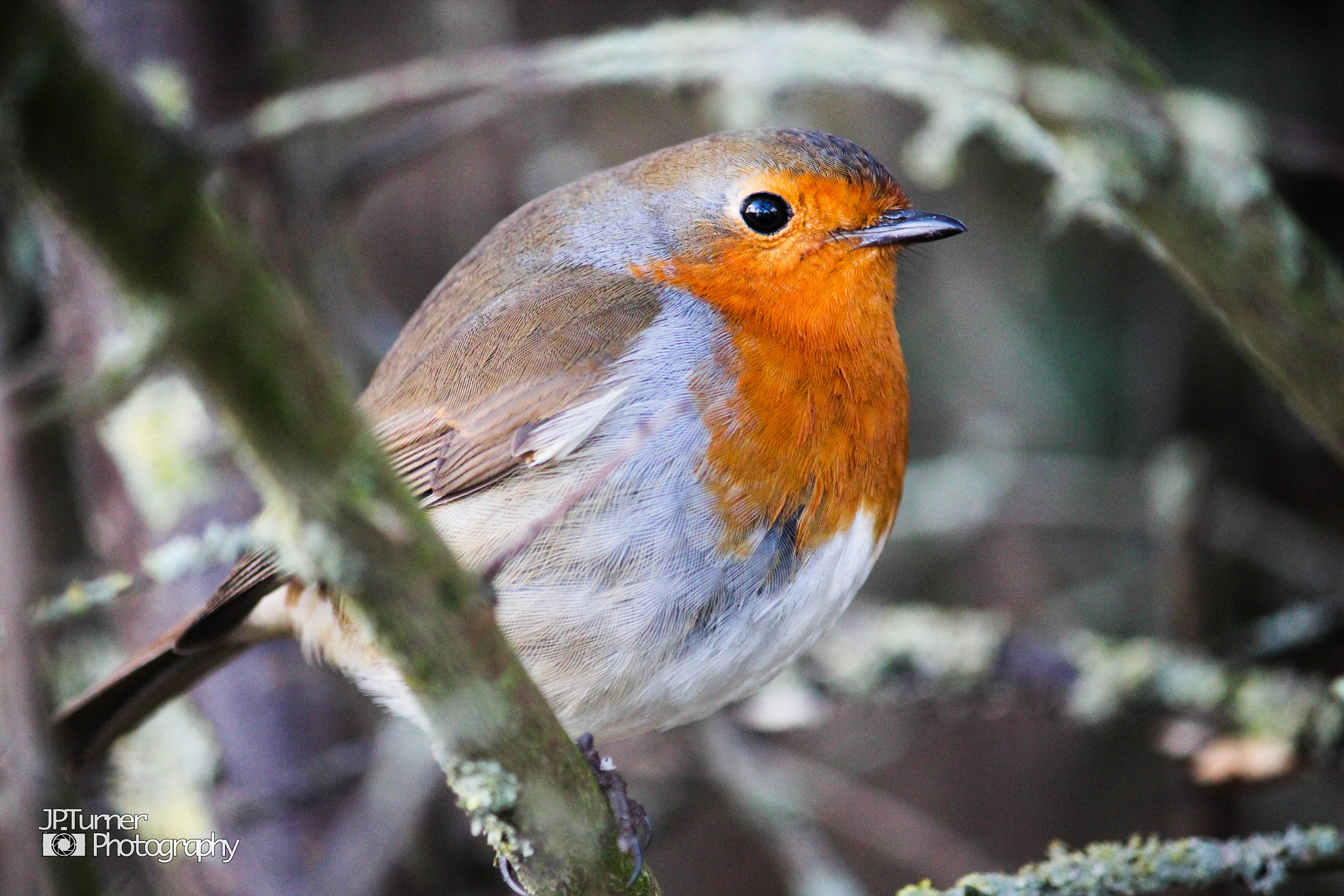 Photograph The Robin by Jona Turner on 500px