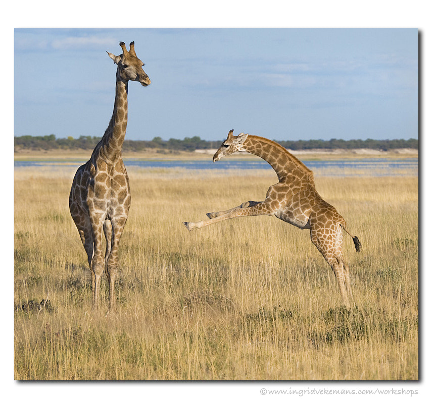 Photograph Learning to Run on Long Legs by Ingrid Vekemans on 500px