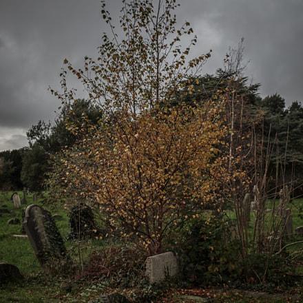 Cemetery, Pentax K-50, smc PENTAX-DA L 18-55mm F3.5-5.6 AL WR