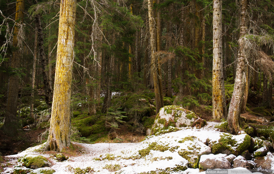 Photograph Forest on the other side by Anton Averin on 500px
