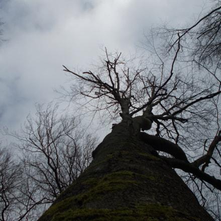 between the roots, Nikon COOLPIX L31