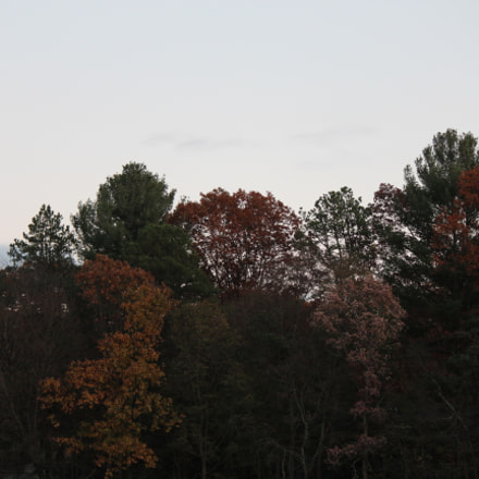 Fall Trees, Canon EOS REBEL T3I, Canon EF-S 55-250mm f/4-5.6 IS