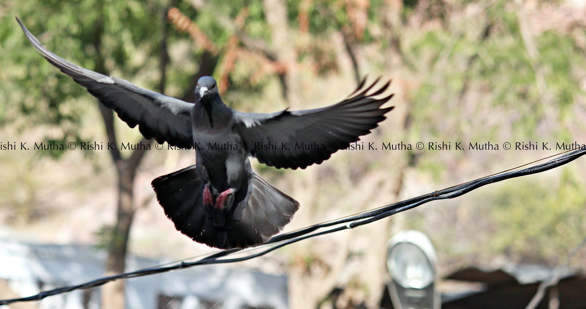 Photograph lets fly by Rishi K. Mutha on 500px
