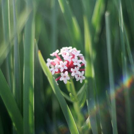 萌动的野花, Canon EOS KISS F, Canon EF 50mm f/1.8 II
