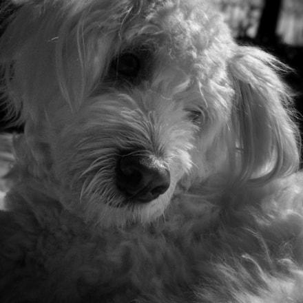 Dog Dramas, Fujifilm FinePix Z90