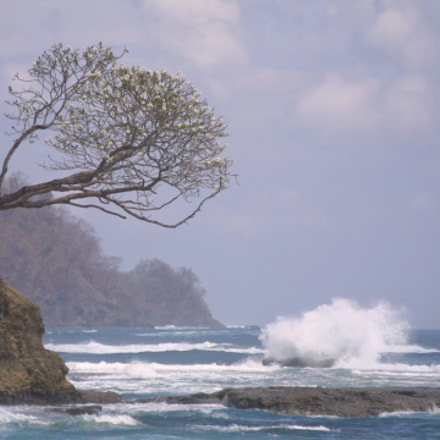 Tree over the ocean, Canon EOS D30, Canon EF 100-300mm f/5.6