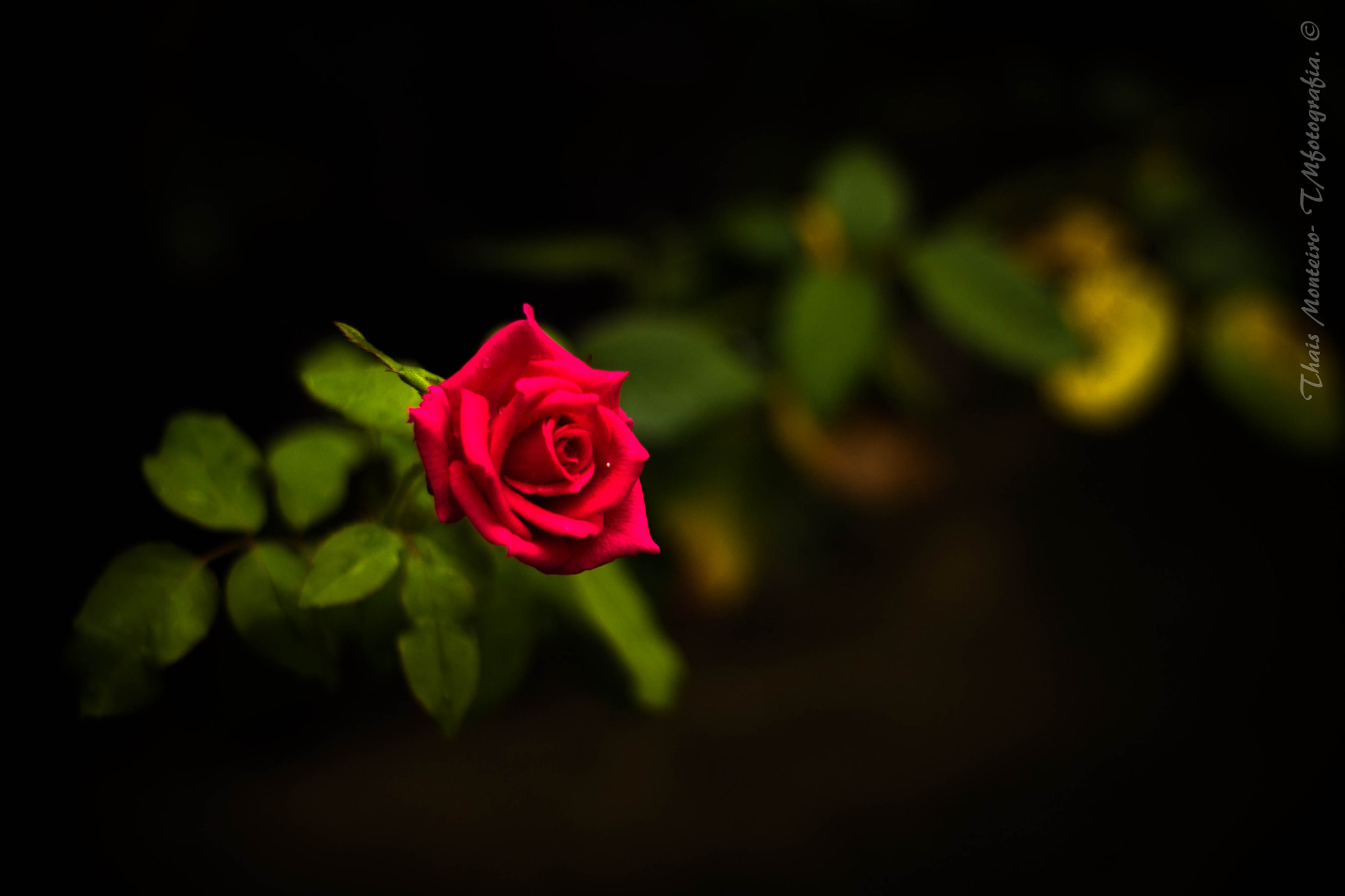 Photograph The flower by Thais Monteiro on 500px