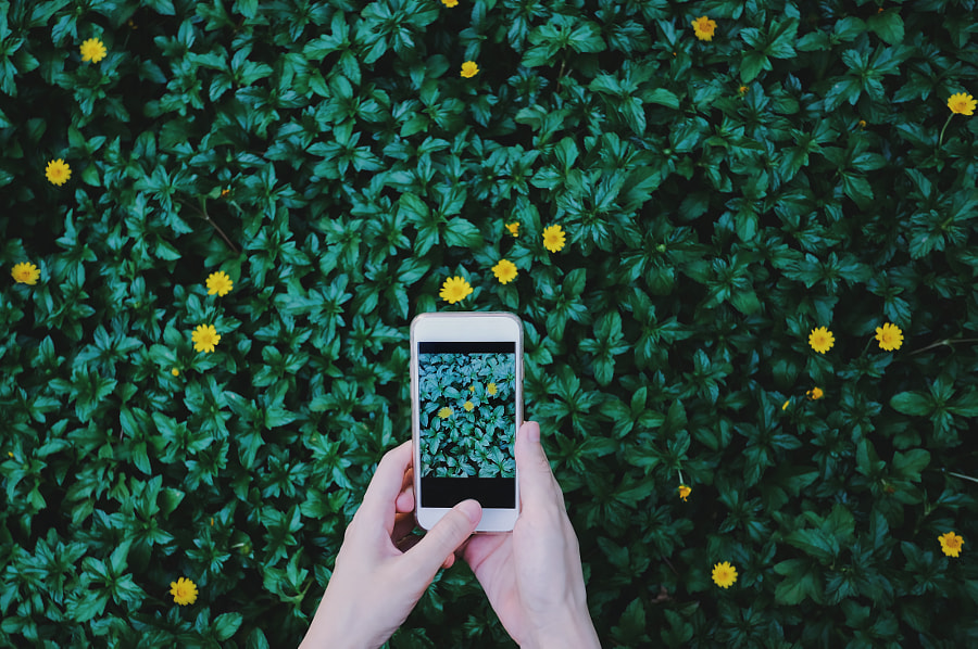 Female hand taking photo of beautiful flowers on green plant by Nuchy Lee on 500px.com