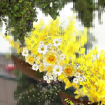 S rie Flores, Canon POWERSHOT A550