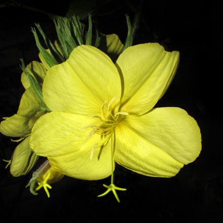 flower, Canon POWERSHOT SX170 IS