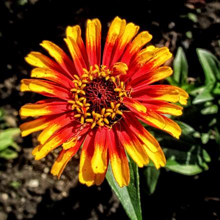 CPI flower 03, Canon IXUS 230 HS