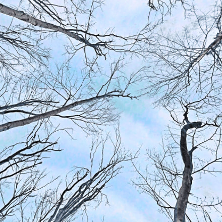 Bare tree in cold, Fujifilm FinePix JX550