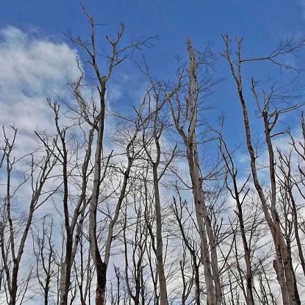 Bare tree forest, Fujifilm FinePix JX550