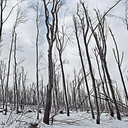 Forest in cold winter, Fujifilm FinePix JX550