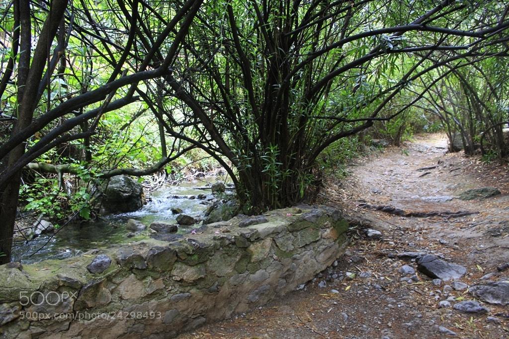 Photograph El bosque encantado by Marta Gámez Medina on 500px