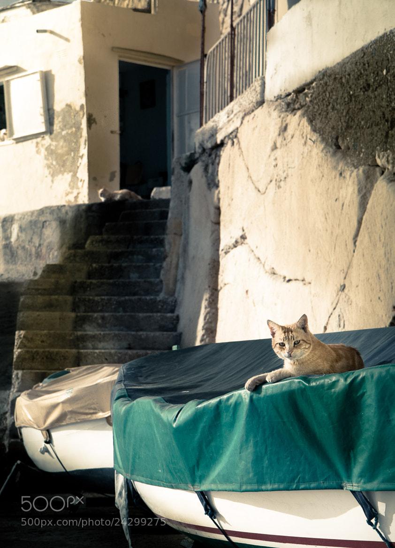 Photograph Cat by Marc Wansky on 500px