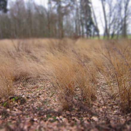 grass red, Canon POWERSHOT A3300 IS