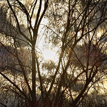 Sun Behind Tree