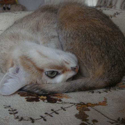Cats, lovely fluffy pets., Sony DSC-T77