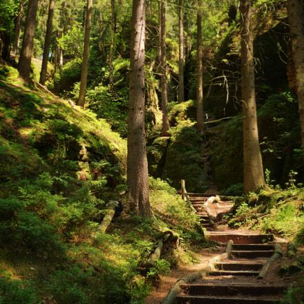Forest Path, Panasonic DMC-FZ45