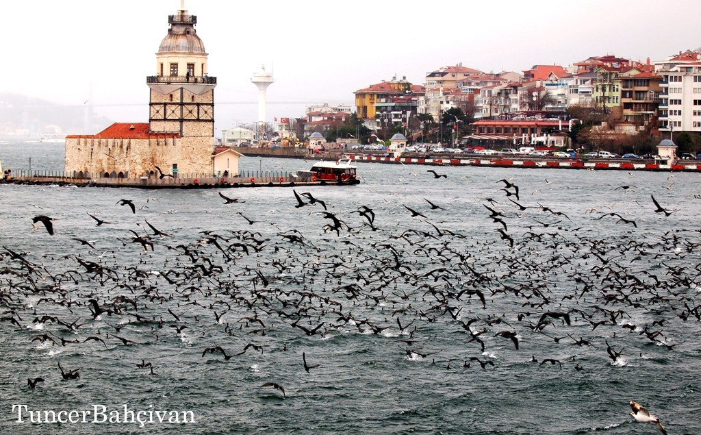 Photograph AttackToFishes by Tuncer Bahçivan on 500px