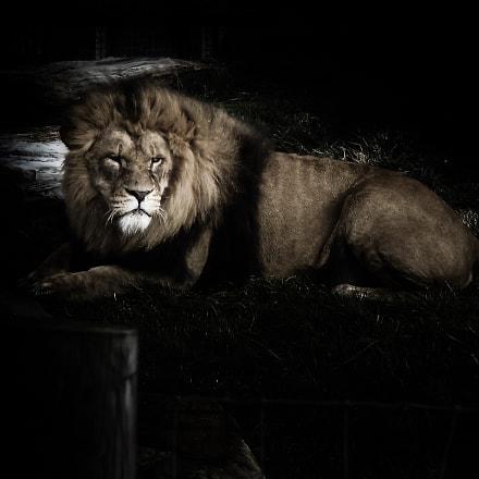 Lion, Fujifilm FinePix JZ250/JZ260