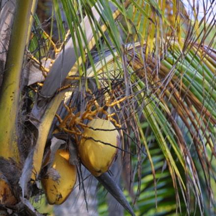 Coconut colors, Canon EOS D30, Canon EF 70-200mm f/4L