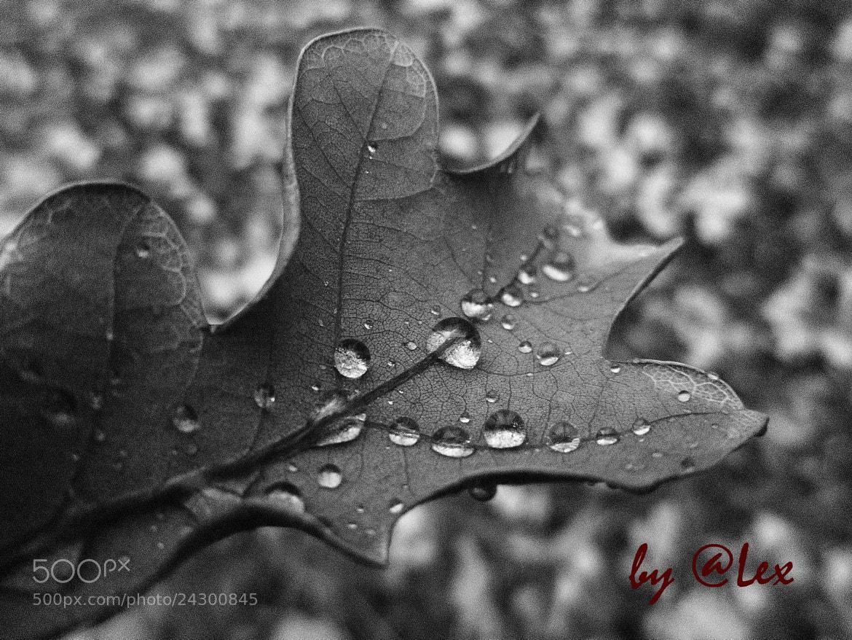 Photograph After rain by Alex Novikov on 500px