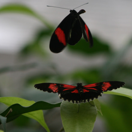 Butterflies, flying with the, Canon EOS 400D DIGITAL, Canon EF 75-300mm f/4-5.6 USM