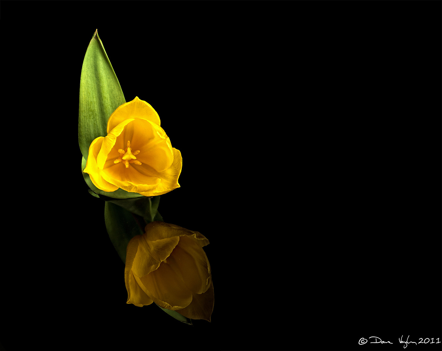 Photograph Yellow  by David Vaughan on 500px