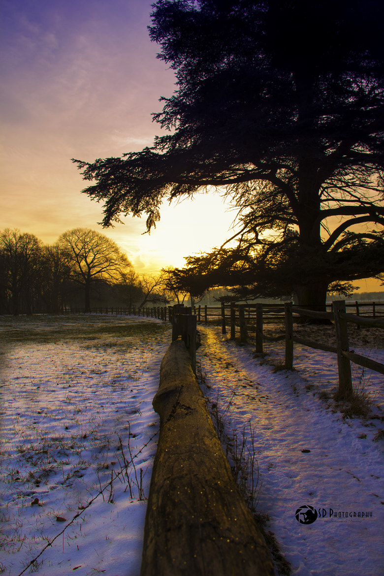 Photograph Winter morning by Danny schurgers on 500px