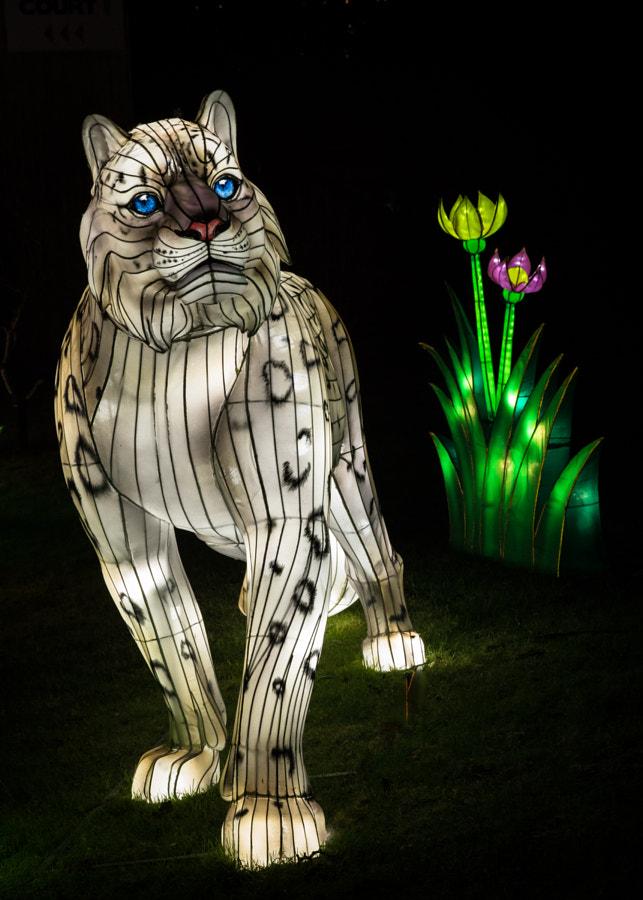 Snow Leopard Lantern
