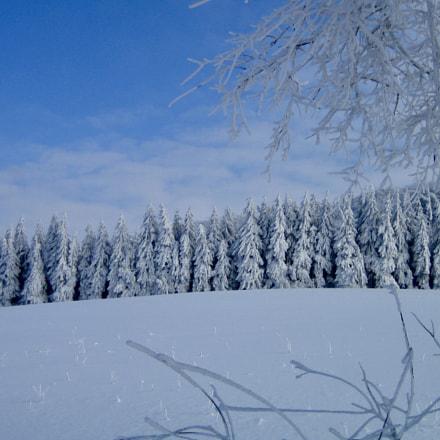 Fairytale Forest, Canon DIGITAL IXUS 40
