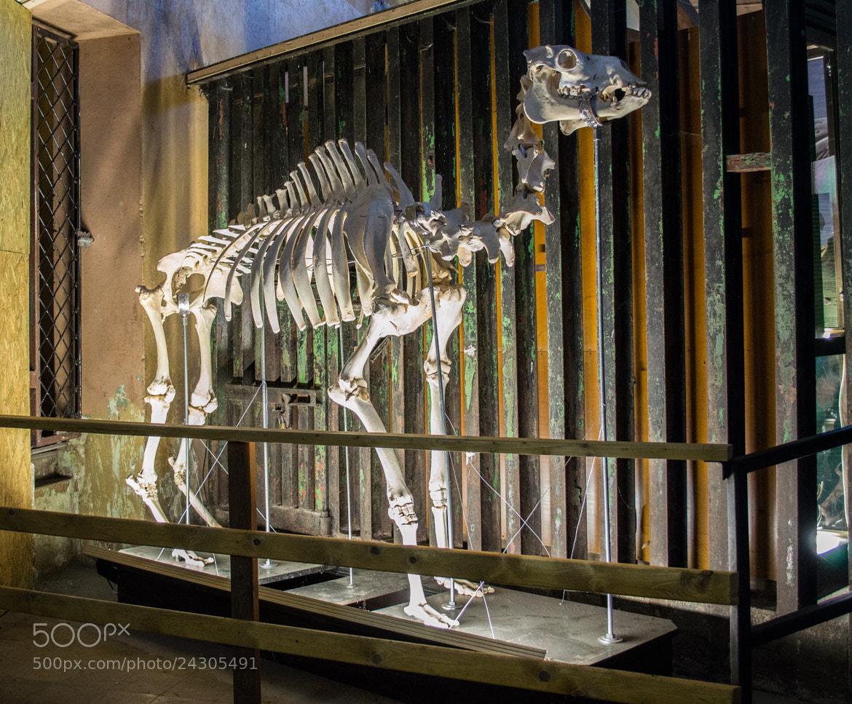 Photograph Camel by Olga Filipova on 500px