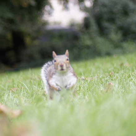 Squirrel life, Sony DSLR-A450