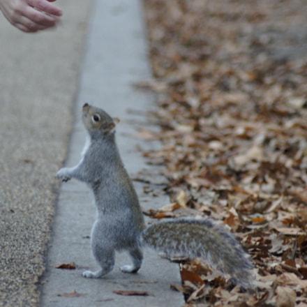 Squirrel life, Sony DSLR-A450, Tamron AF 70-300mm F4-5.6 Di LD Macro 1:2